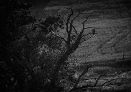 Birds, Wildlife, Black&White