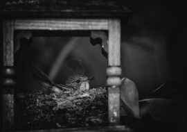 SpFlycatcher_FP17_01
