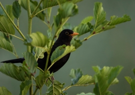 Birds, Wildlife, Switzerland