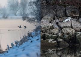 WinterLakeCH_FP17_019