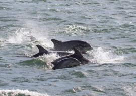 Whale, Dolphin, Wildlife, NYC