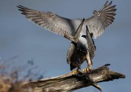 Birds, Wildlife
